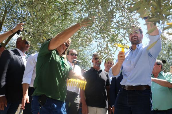Caçapava do Sul deu a largada na colheita de olivas no Rio Grande do Sul