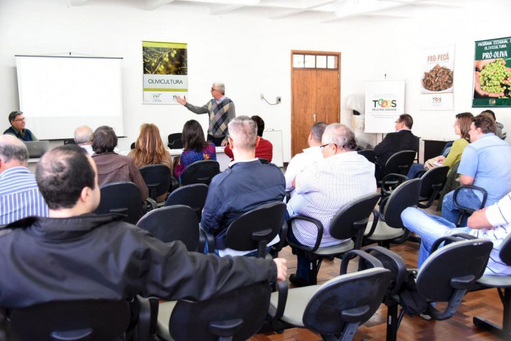 Produtores avançam na formação de um Instituto Brasileiro da Olivicultura