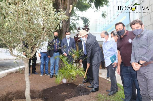 Olivicultura cria raízes na Assembleia Legislativa do Rio Grande do Sul
